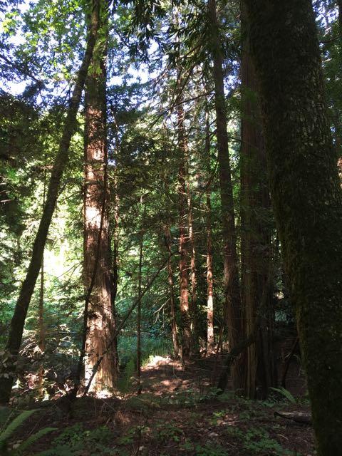 2018 05 20 Redwoods 25