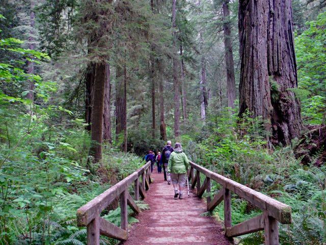 2018 05 20 Redwoods 250