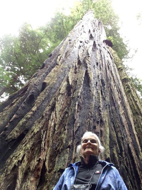 2018 05 20 Redwoods 251