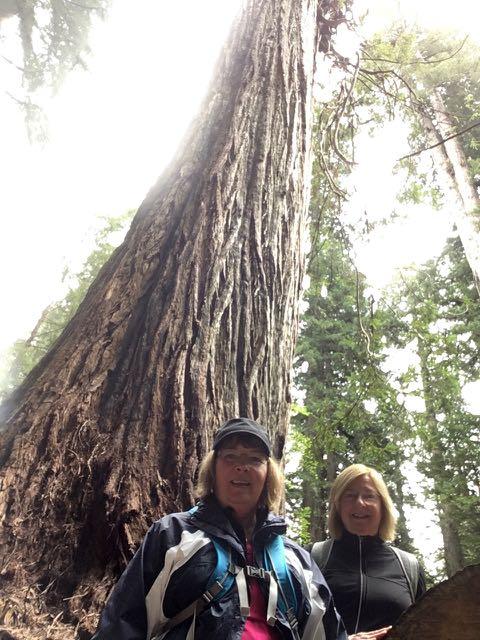 2018 05 20 Redwoods 255