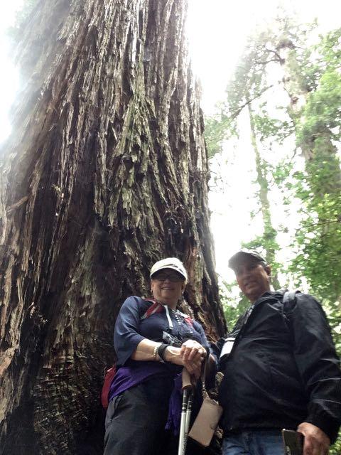 2018 05 20 Redwoods 256