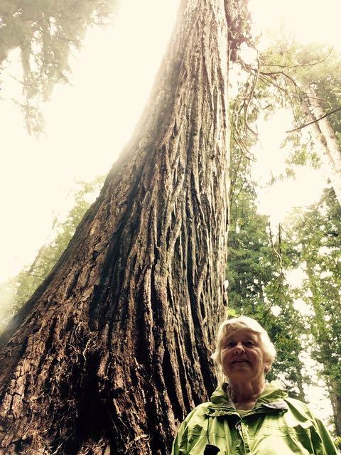 2018 05 20 Redwoods 258