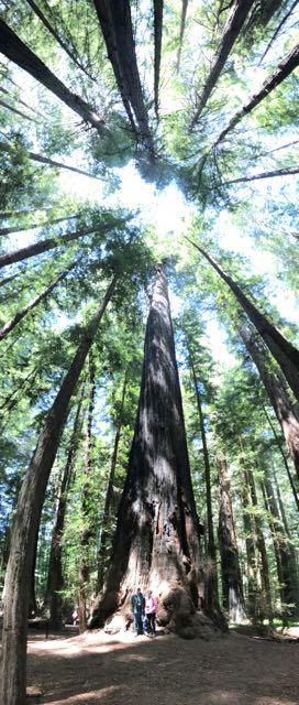 2018 05 20 Redwoods 26