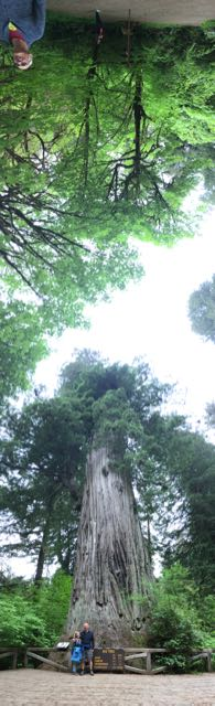 2018 05 20 Redwoods 260