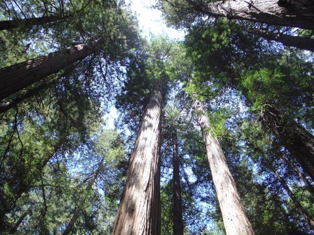 2018 05 20 Redwoods 28