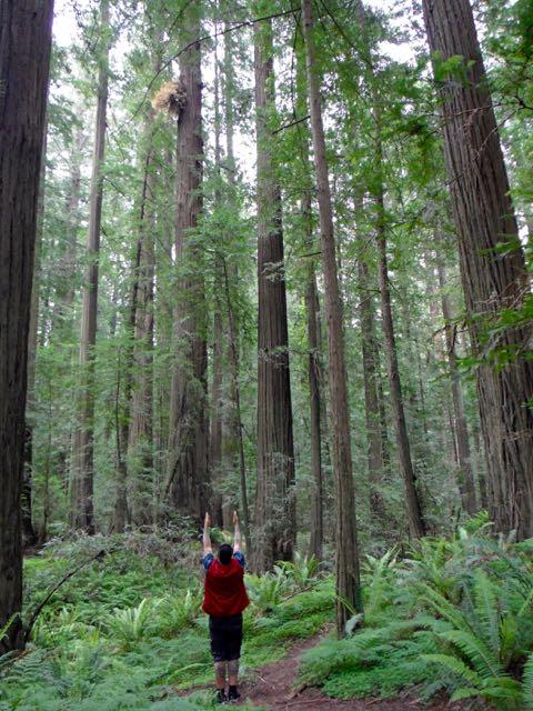 2018 05 20 Redwoods 29