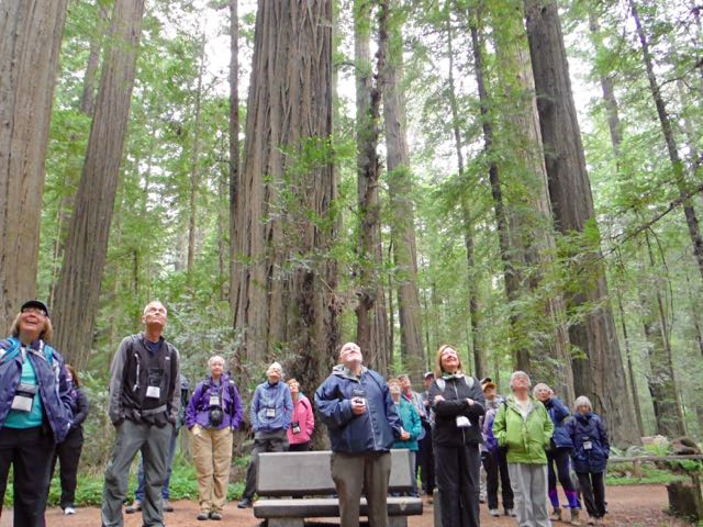 2018 05 20 Redwoods 30