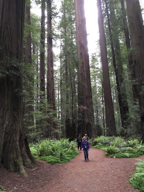 2018 05 20 Redwoods 31