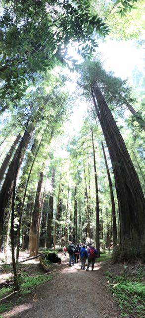 2018 05 20 Redwoods 32