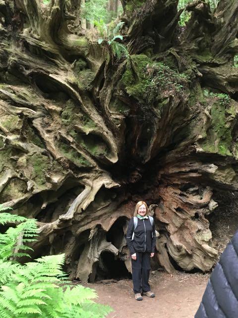 2018 05 20 Redwoods 34