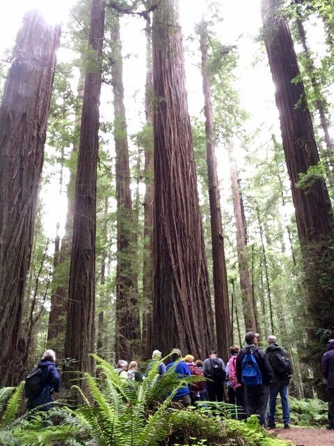 2018 05 20 Redwoods 39