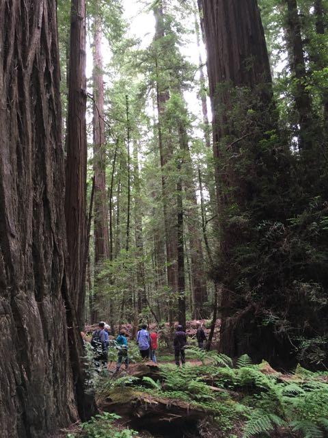 2018 05 20 Redwoods 40