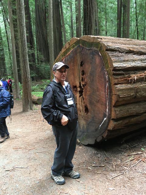 2018 05 20 Redwoods 42