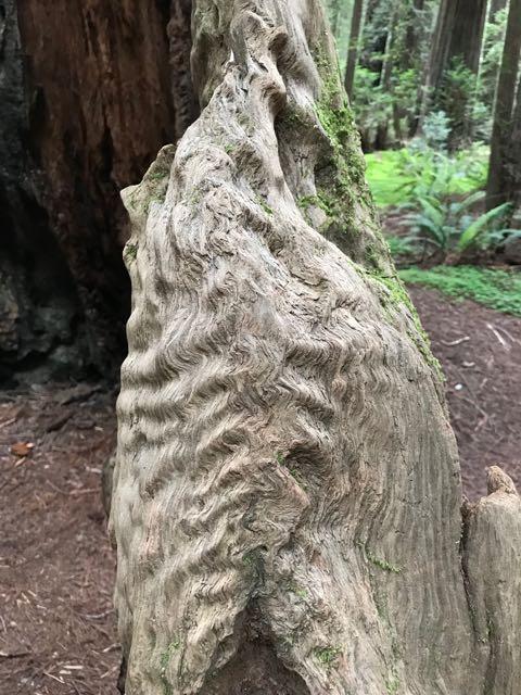 2018 05 20 Redwoods 44