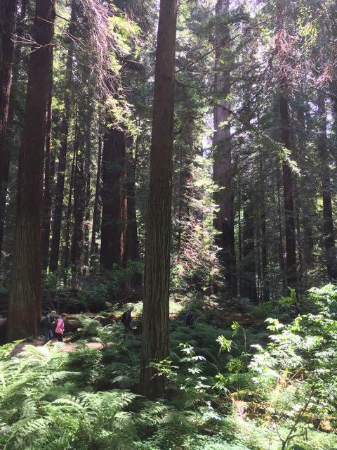 2018 05 20 Redwoods 49