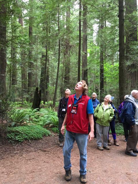 2018 05 20 Redwoods 5