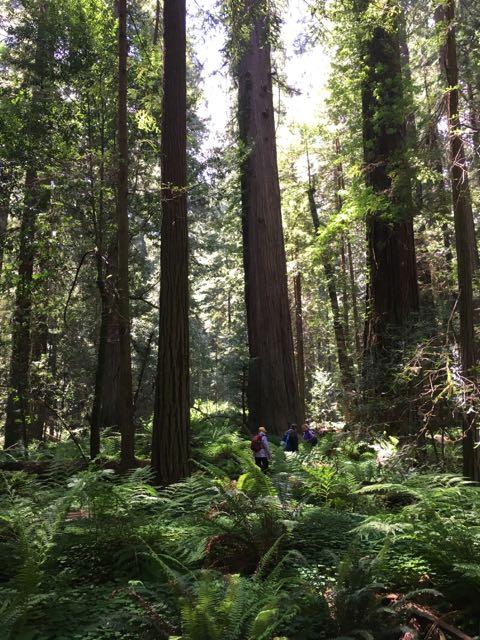 2018 05 20 Redwoods 50