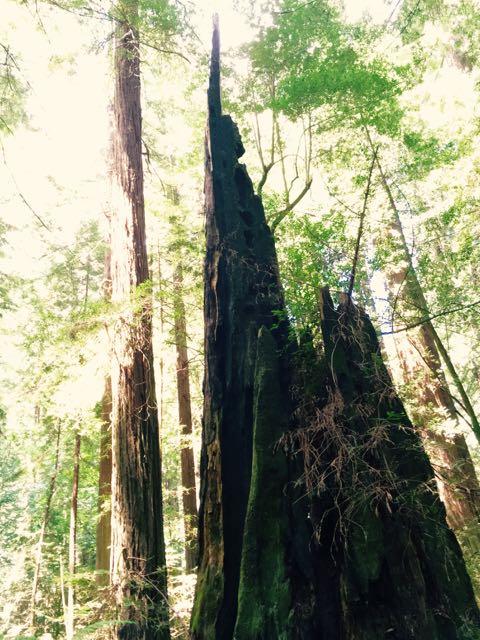 2018 05 20 Redwoods 51