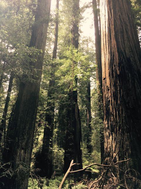 2018 05 20 Redwoods 57