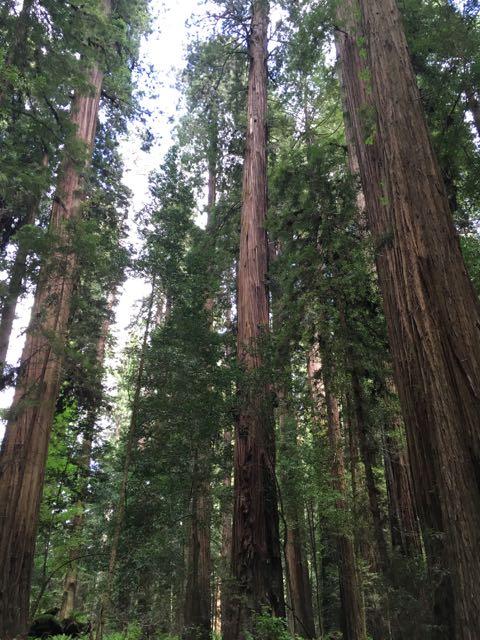 2018 05 20 Redwoods 58