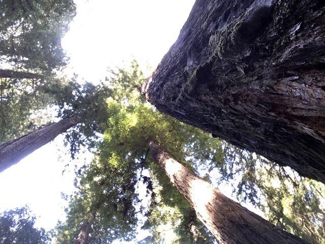 2018 05 20 Redwoods 6