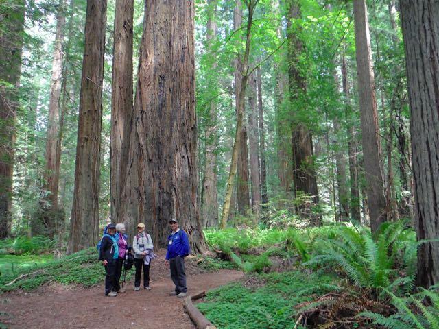 2018 05 20 Redwoods 65