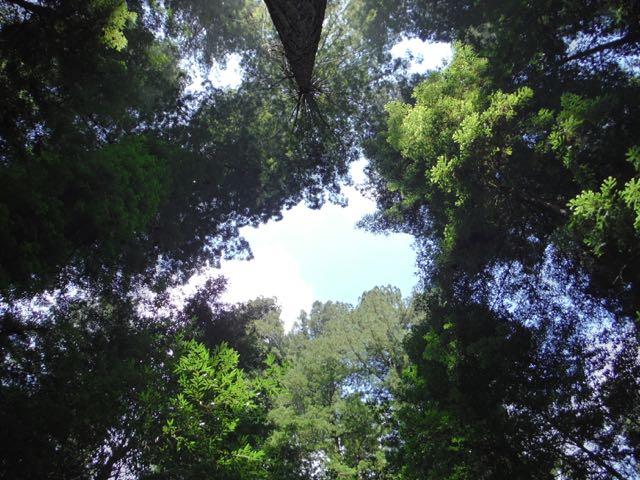 2018 05 20 Redwoods 67