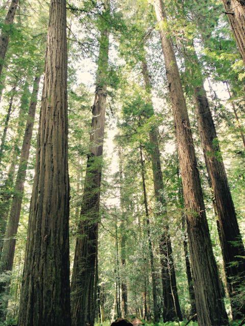 2018 05 20 Redwoods 68