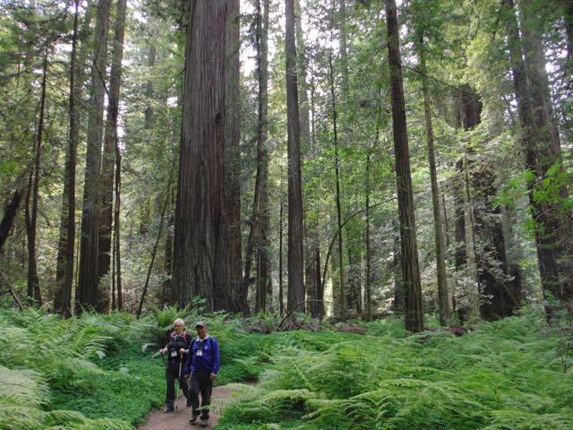 2018 05 20 Redwoods 72