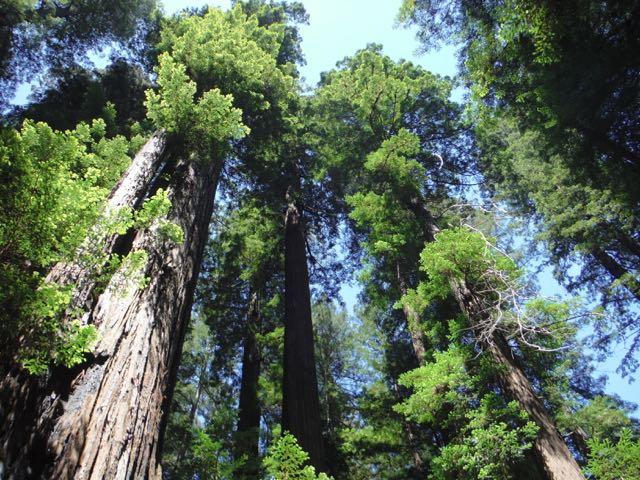 2018 05 20 Redwoods 8