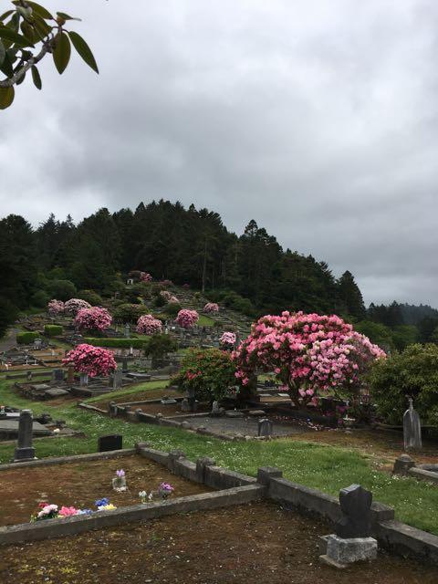 2018 05 20 Redwoods 82
