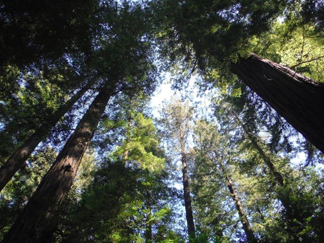 2018 06 03 Redwoods 11
