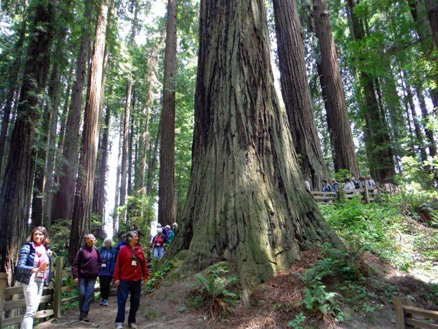 2018 06 03 Redwoods 119