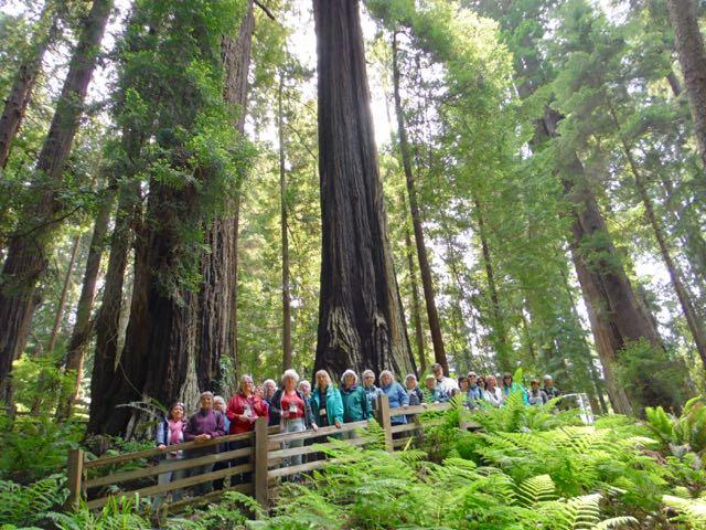 2018 06 03 Redwoods 121