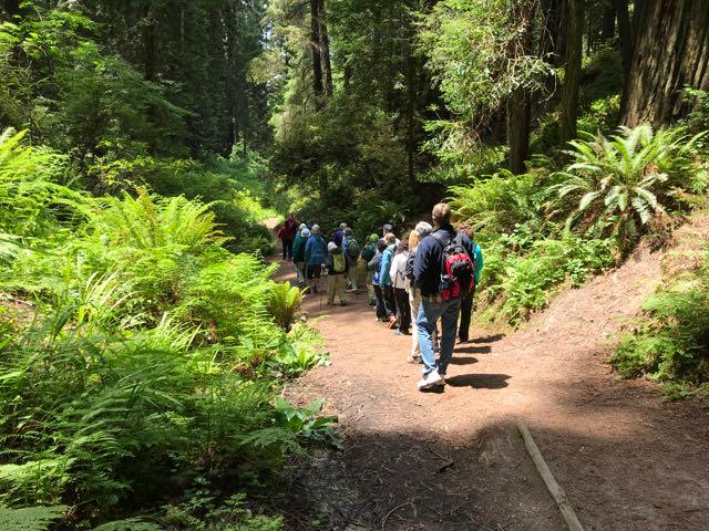2018 06 03 Redwoods 122