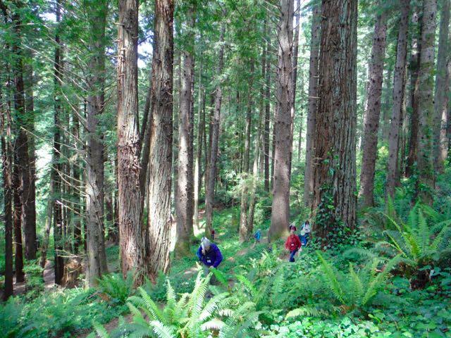2018 06 03 Redwoods 128