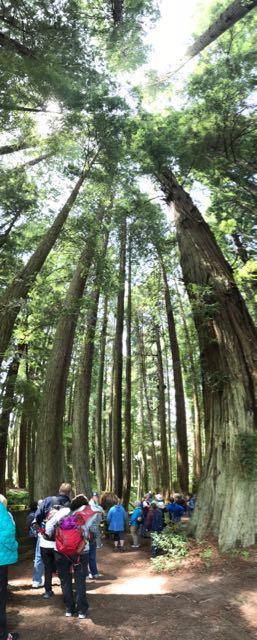 2018 06 03 Redwoods 129