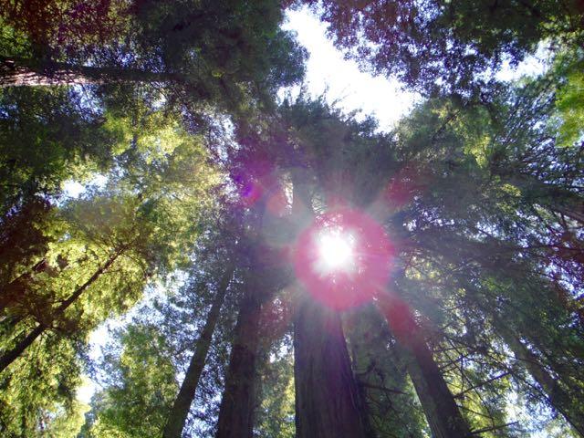 2018 06 03 Redwoods 14