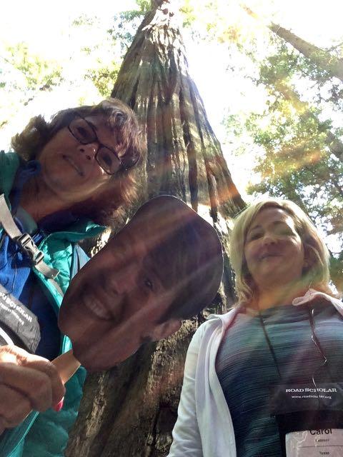 2018 06 03 Redwoods 15