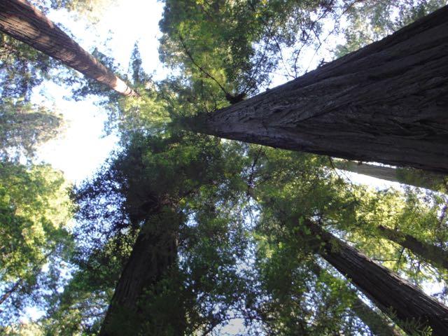 2018 06 03 Redwoods 16
