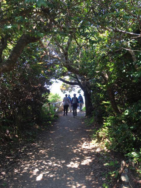 2018 06 03 Redwoods 168