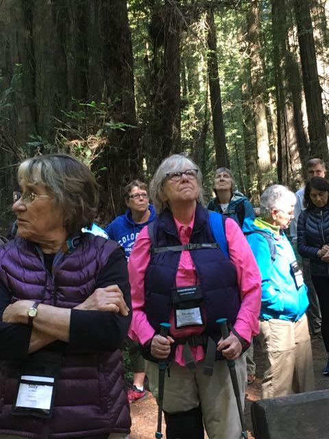 2018 06 03 Redwoods 17