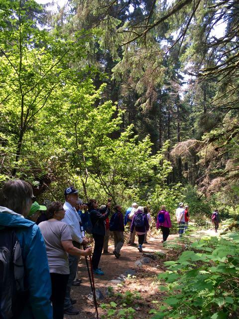 2018 06 03 Redwoods 176