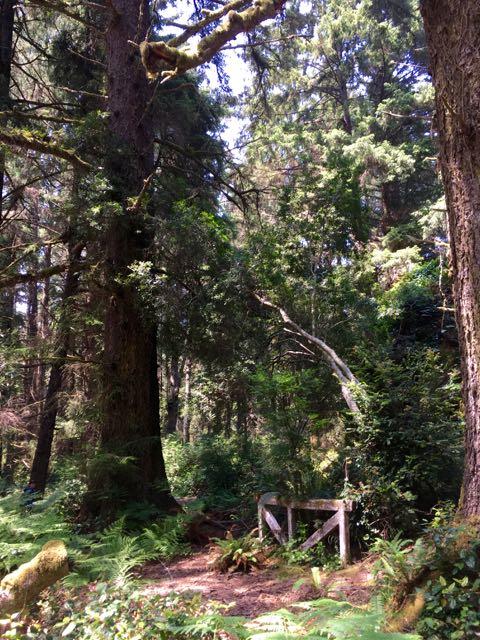 2018 06 03 Redwoods 177