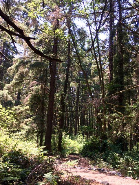 2018 06 03 Redwoods 178