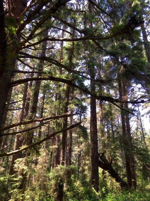 2018 06 03 Redwoods 179