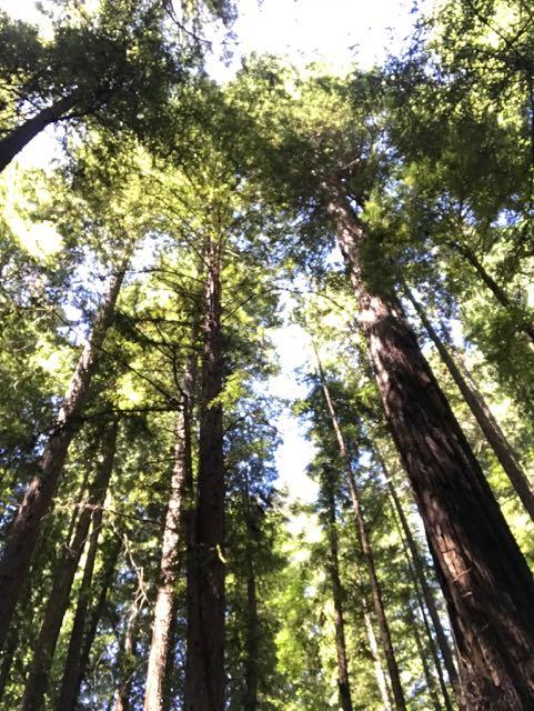 2018 06 03 Redwoods 18