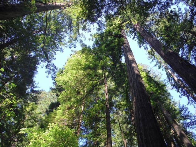 2018 06 03 Redwoods 20