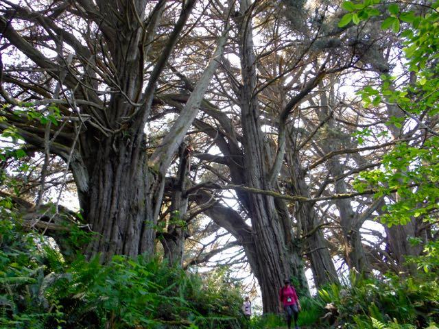 2018 06 03 Redwoods 204