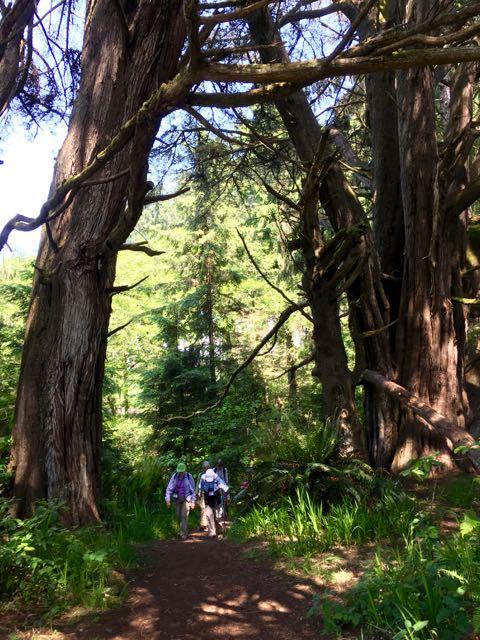 2018 06 03 Redwoods 205